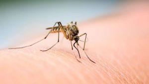 הדברה ליתושים