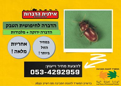 הדברת חיפושית הטבק
