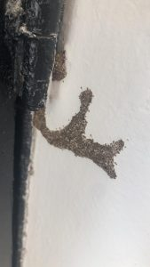 הדברת טרמיטים בקירות